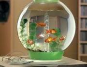 mali akvarijum