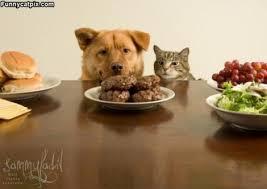 Hrana za mačke-vlažna