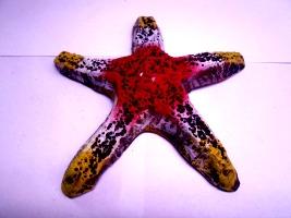 keramika zvezda