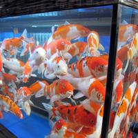 Akvarijum-ne šaljemo kurirskom službom